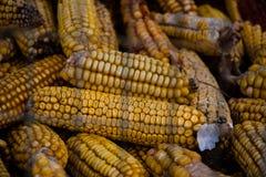 背景玉米烘干了 库存照片