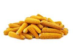 背景玉米白色 免版税库存图片
