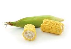 背景玉米白色 库存图片
