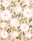 背景玫瑰白色 免版税库存照片
