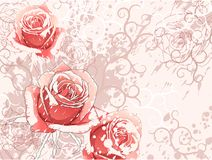 背景玫瑰 库存照片