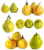 背景玻璃梨s基体白色 在被隔绝的背景的水多的鲜绿色和黄色梨 免版税库存照片