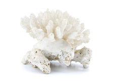 背景珊瑚查出的白色 免版税库存照片