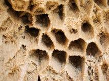 背景珊瑚 免版税库存图片