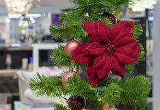 背景球圣诞节花玻璃查出一品红红色白色 在圣诞树的装饰 图库摄影