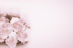 背景瓣玫瑰色玫瑰华伦泰婚礼 库存图片