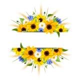 背景用向日葵、雏菊、麦子的矢车菊和耳朵 向量EPS-10 免版税库存照片