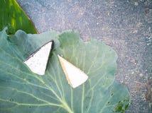 背景用在圆白菜叶子的青纹干酪 库存照片