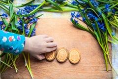 背景用曲奇饼复活节彩蛋形状在蓝色snowdrops的在采取曲奇饼的一只木砧板和小孩子的手上 免版税库存图片