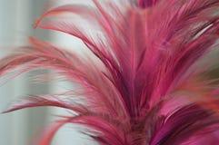 背景用羽毛装饰丁香粉红色 图库摄影