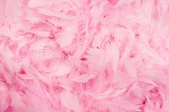 背景用羽毛装饰粉红色 免版税库存图片