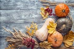 背景用麦子的南瓜、耳朵和在gra的秋叶 免版税库存照片