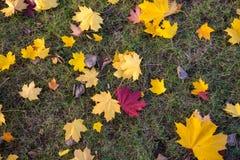 背景由草和秋叶做成 免版税图库摄影