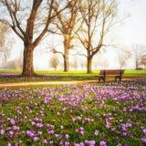 背景番红花开花查出的罐春天纺织品空白黄色 库存照片