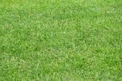 背景的夏天绿色草坪 免版税库存照片