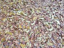 背景的干燥叶子纹理在地板上的,用途或网络设计 免版税库存图片
