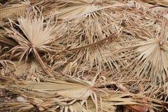 背景的干燥棕榈叶 图库摄影