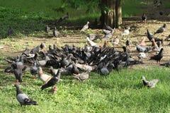 背景的很多鸟 库存照片