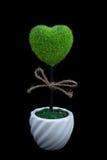 黑背景的心形的植物 免版税库存照片