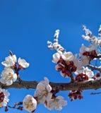 背景的春天框架 免版税库存照片