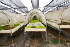 背景的有机菜农场。 库存照片