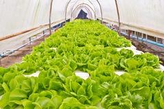 背景的有机菜农场。 库存图片