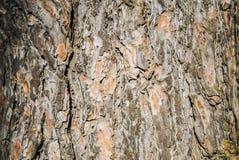 背景的杉木吠声纹理宏观射击 库存图片