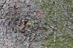 背景的树皮纹理 免版税图库摄影