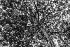 背景的树 免版税库存图片