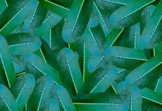 背景的概念绿色羽毛叶子样式 库存例证