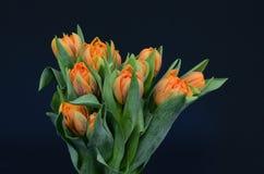 背景的橙色郁金香花 免版税库存图片