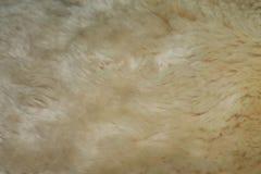 背景的毛皮米黄表面 免版税库存照片
