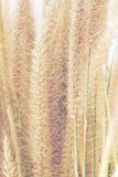 背景的热带草 免版税库存照片