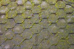背景的生苔屋顶 库存图片