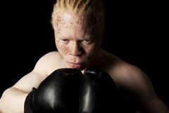 白变种拳击手 免版税库存照片