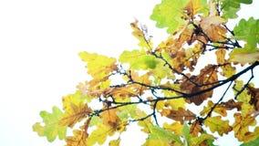 背景的秋叶 库存图片