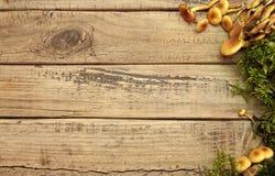 背景的秋天蘑菇 库存照片