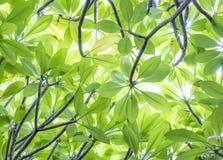 背景的绿色叶子 库存照片