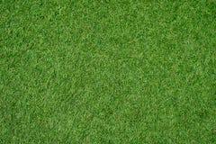背景的绿色草坪 绿草背景 纹理 顶视图 免版税库存图片