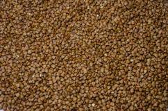 背景的荞麦 免版税库存照片