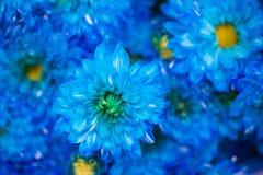 背景的蓝色花 免版税库存图片