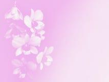 背景的被弄脏的美丽的orchird软的颜色 库存图片