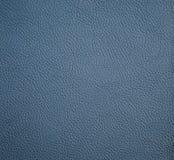 背景的马尾藻类海草皮革纹理 免版税图库摄影