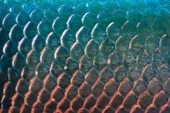 背景的,五颜六色的概念鱼鳞纹理 库存图片