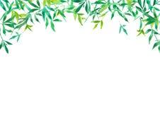 背景的,例证绿色竹叶子 皇族释放例证