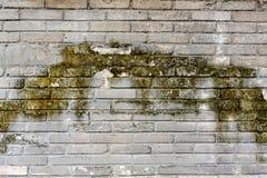 背景的7生苔灰色砖墙 免版税库存图片