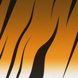 背景的-老虎皮肤纹理 图库摄影