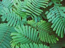 背景的绿色叶子纹理,在黑暗的口气 库存照片