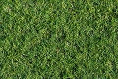 背景的绿色草坪 抽象背景城市草绿色草坪公园纹理视图 名列前茅v 免版税库存照片