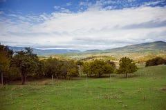 背景的绿色草甸 免版税库存照片